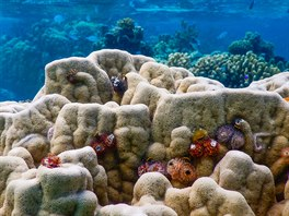 Korálové útesy jsou v Polynésii plné života.