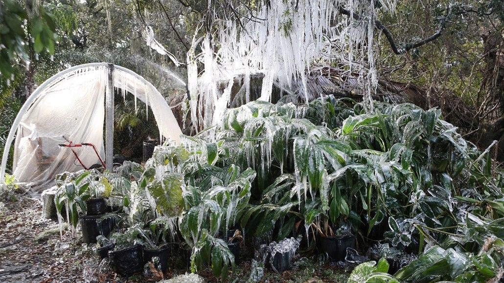 98077b4fc05 Neobvykle chladné počasí zasáhlo i Floridu (3. ...