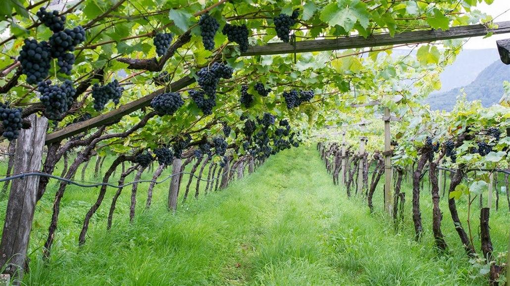 Malá vinařství skupují velcí investoři. Kvůli prestiži i pro radost