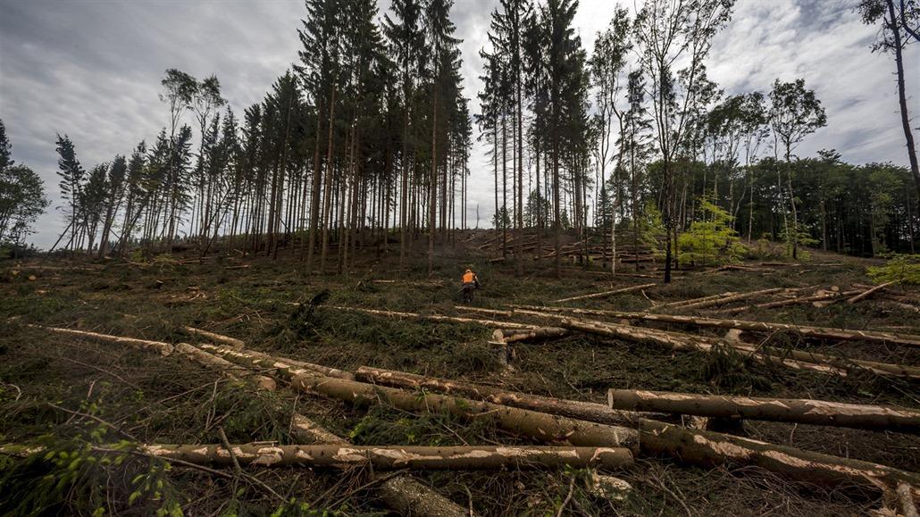 Kůrovec může letos napadnout polovinu lesů v Česku, varuje Brabec