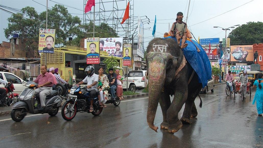Paradox. Sloni se zachrání, když budou pomáhat těm, kdo je ohrožují