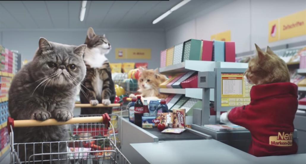 Velké kočičky videoklipy