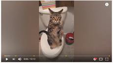 temné kočička porno zdarma vynucené porno video