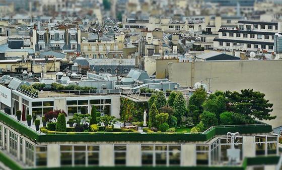 Zelené střechy dokážou snížit teplotu v městské zástavbě o více než 8 °C.