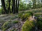 Listnaté lesy jsou pro Podyjí typické.