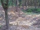 Tůně v lesích u Hradce Králové poslouží zvěři jako napajedla.
