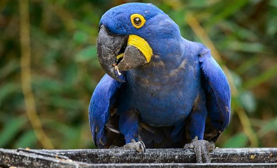 Kasuáři patří mezi velké ptáky a jejich bydlištěm jsou tropické deštné pralesy na Nové.