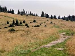 Vrcholové partie pohoří Gorce jsou částečně odlesněné.
