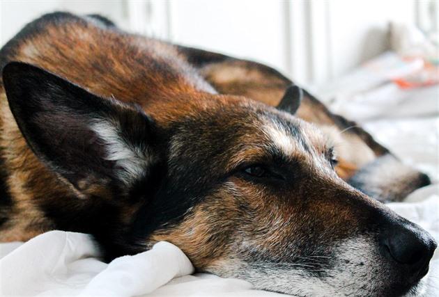 Psi mohou nastydnout stejně jako lidé. Nejvíc pomáhá prevence