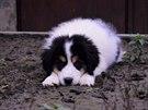 Bakteriální infekcí jsou nejvíce ohrožena štěňata, staří psi a psi s oslabenou...