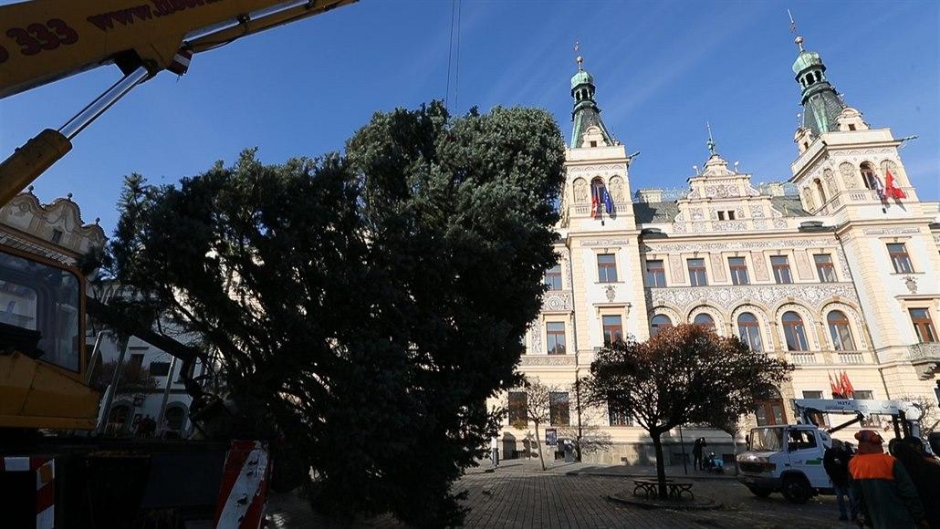 Na pardubické náměstí dorazil vánoční strom z Rybitví
