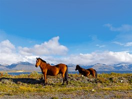 Na divoké koně můžete narazit na březích kanálu Beagle nedaleko Ushuaii.