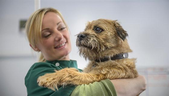 Zácpa u psů vzniká nejčastěji důsledkem pozření nestravitelného materiálu,...
