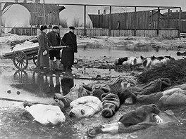 Přeživší pohřbívají mrtvé za blokády Leningradu za 2. světové války.