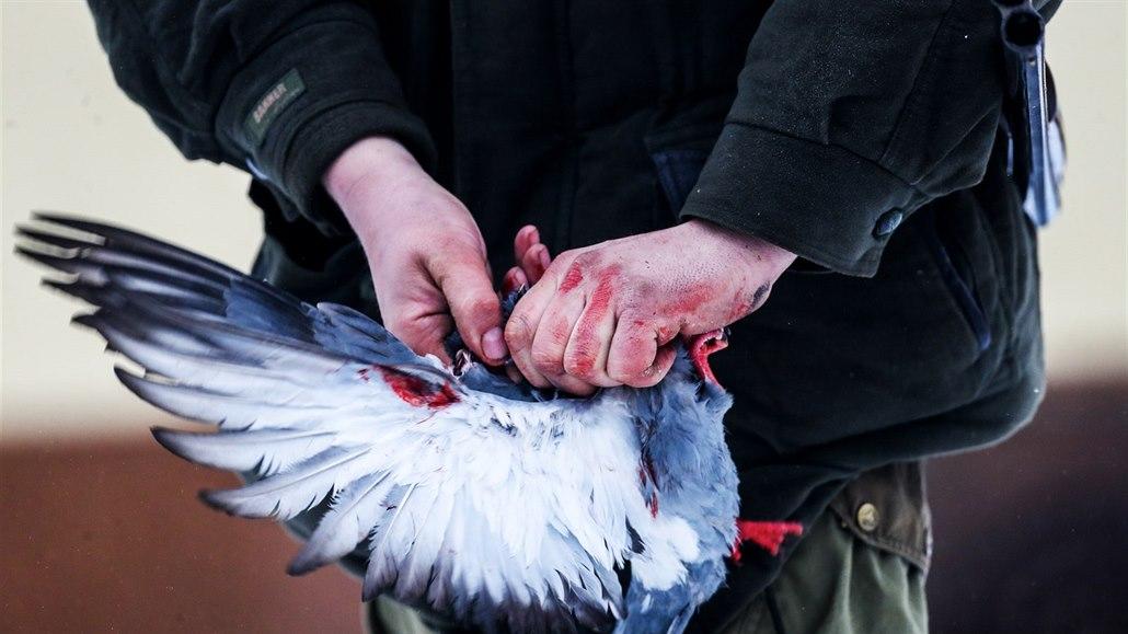 holub seznamka najde někdo z Austrálie