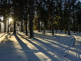 Vbrdském lese