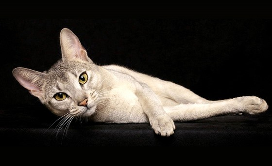 asijské kočička sex pic teen vezme první velký péro