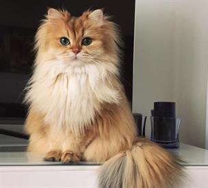 tmavé vlasy kočička fotky