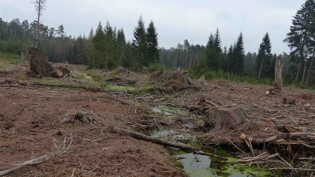Těžba dřeva v rezervaci šokovala ekology, ministerstvo mluví o kůrovci