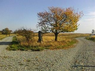 Staré jabloně v Geoparku Ralsko