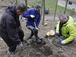 Veřejné sázení stromů uspořádali i v Třebíči. O víkendu přišlo do Libušina...