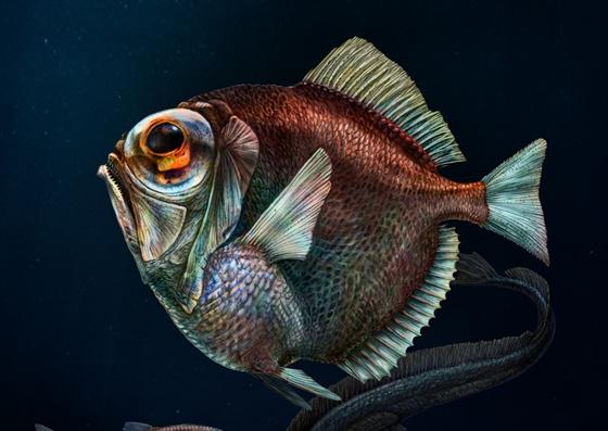 674562b5cf6c Ryby vidí tmu jinak. Český objev z hloubi moří se dostane do učebnic ...