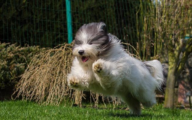 Odis je ideální psí společník z Ukrajiny, miluje sport i lenošení na gauči