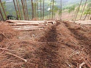 Ekologové opakovaně kritizují způsob, jakým se v Jeseníkách bojuje proti...