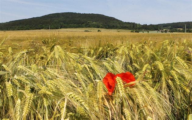 Chladnější počasí zemědělci vítají, o úrodě však rozhodnou další týdny