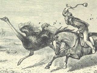 Pštrosí peří bylo cenným artiklem, Jižní Afrika si proto na něj chtěla udržet...