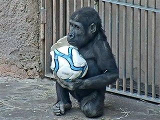Stejně jako navléct si Ajabu umí míč z hlavy i s přehledem strhnout.