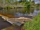 Na horním toku Vltavy jsou dvě zábrany, které mají zabránit kaprovitým rybám,...