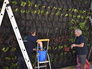 Zahradníci pracují na visuté zahradě na stěně městské knihovny v Poličce.