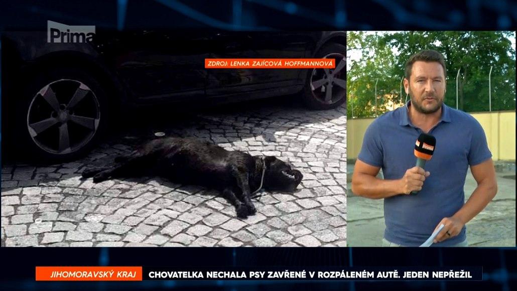 Chovatelka nechala psy v rozpáleném autě. Jeden z nich přehřátí nepřežil