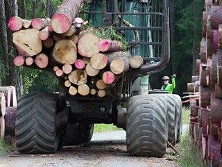 V Libereckém kraji se množí kůrovec.