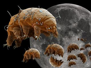 Na Měsíci je nyní tisíce želvušek (Milnesium tardigradum), které přežijí...