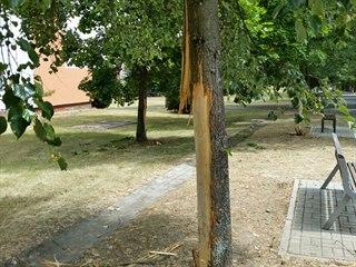 U tří stromů pes poničil kůru i živou část kmene.