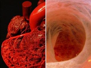 Orgány v lidském těle