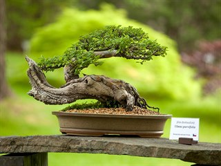 Výstava bonsají bude mít jako obvykle svoji venkovní expozici. A nebude jediná,...