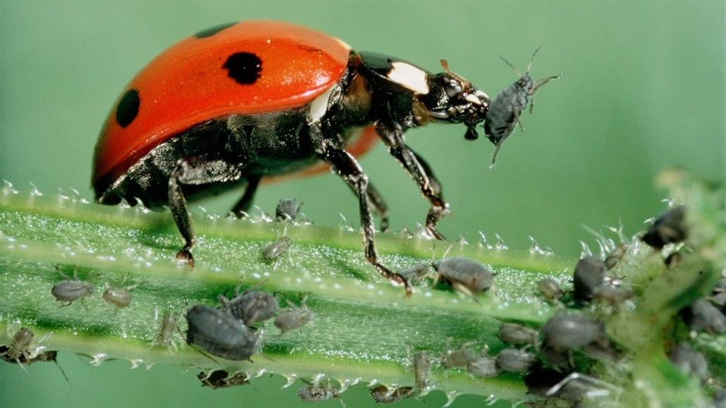 Zatočte se škůdci na zahradě. Poradíme, jak se zbavit mšic či padlí