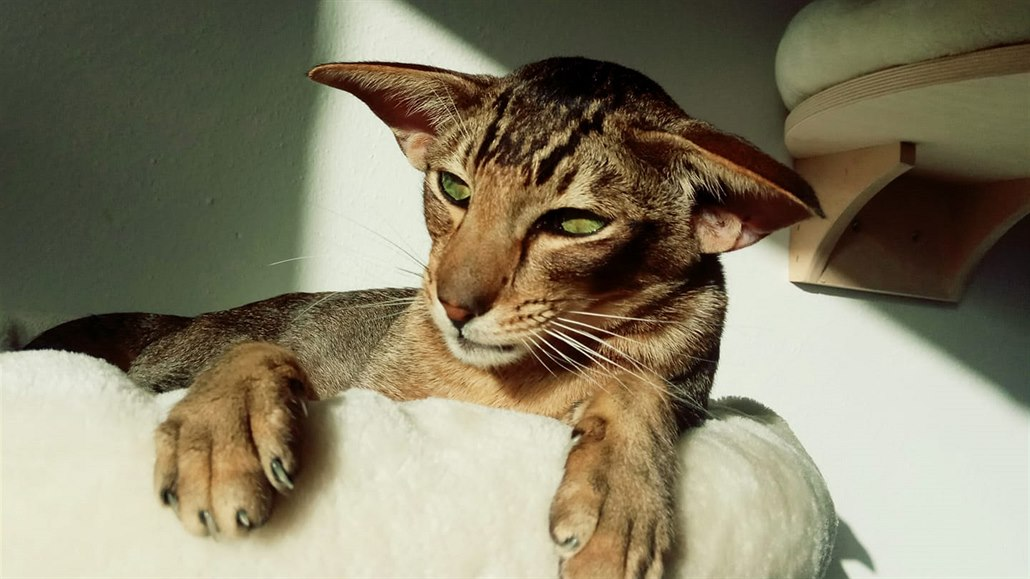 Kočička pro vás