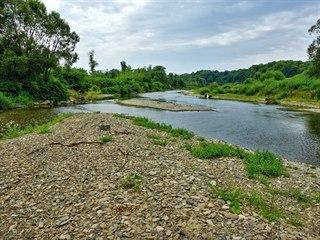 Řeka Bečva v lokalitě zvažované přehrady Skalička poskytuje domov řadě...