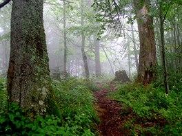 Chodník vdeštivém pralese