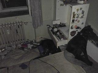 Strážníci museli v bytě odchytit dva vystresované psy.