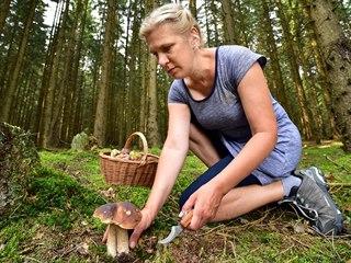 Pozor, v takovém rozsahu, jako u nás, není houbaření jinde v Evropě tolerováno....
