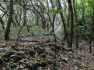 Zarostlý vrch Mělce, který se nachází asi tři kilometry západně od Loun, ukrývá...