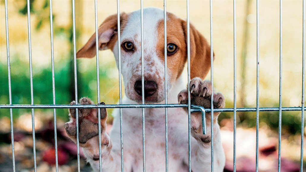 Kdo ubližuje zvířeti, bude se stejně chovat k lidem, říká psychiatr Cimický