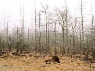 Zničené lesy v Krušných horách nad městem Most. (1990)