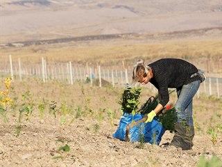 Na dvě stě tisíc stromků vysadí v průběhu několika let na 15 hektarech...