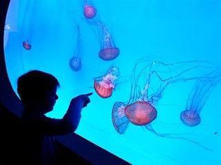 V Arkádách Pankrác otevřeli největší medúzárium v Evropě.
